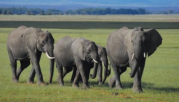 Photos from #Kenya #Travel - Image 36
