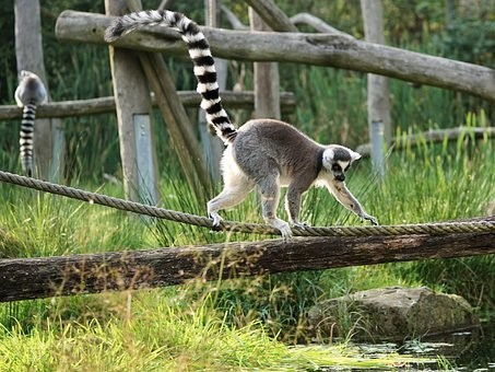 Photos from #Madagascar #Travel - Image 8