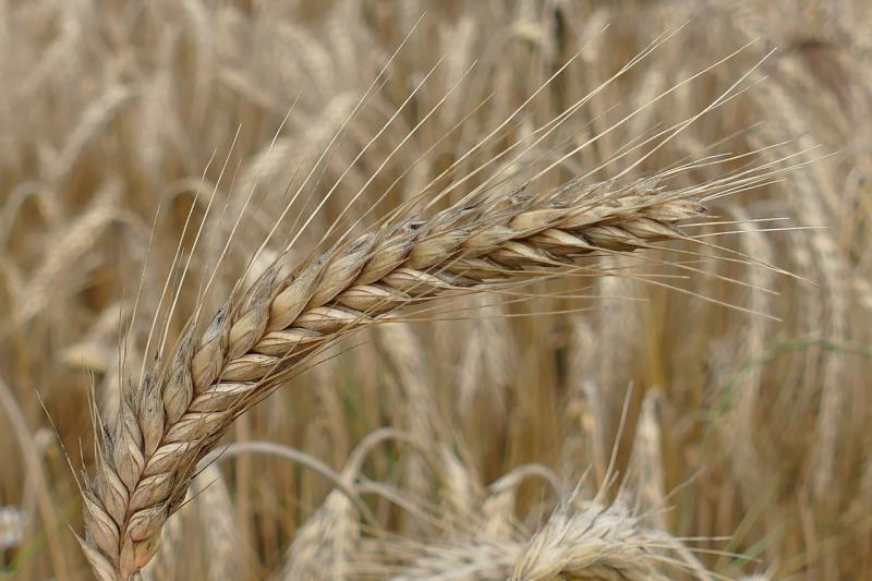 صور لـ #التفاصيل #باور #الزراعة #خبز #حقل #إذن #صورة قريبة