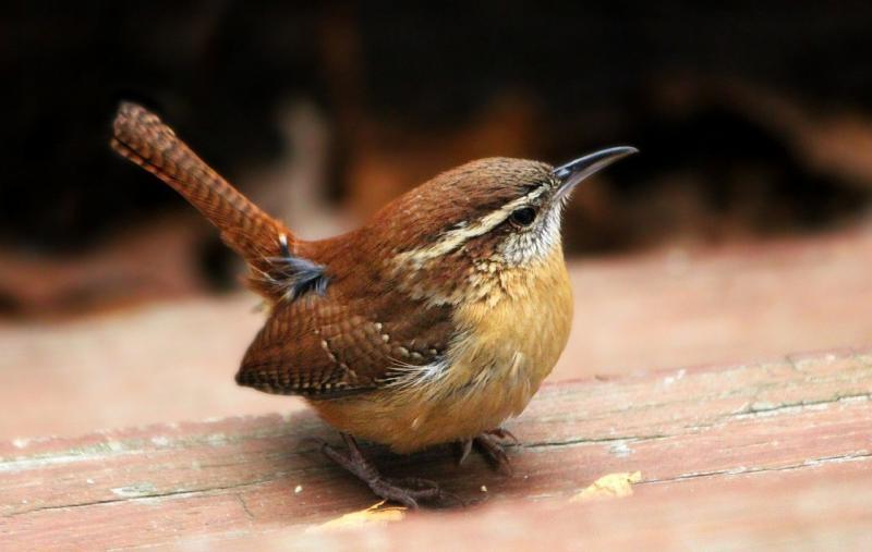 صور تحتوي #طائر_النمنمة #طائر #الحيوانات_البرية #طبيعة