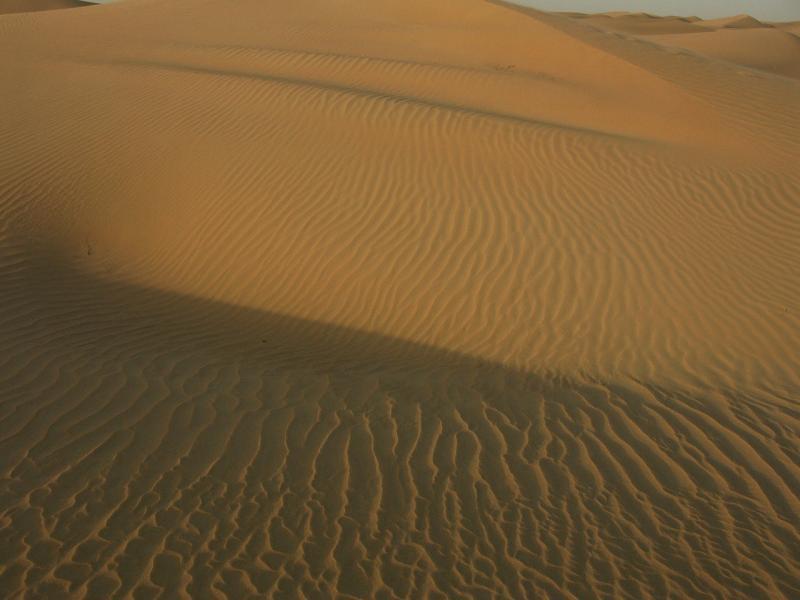 صور لـ #الإمارات_العربية_المتحدة #الصحراء #الكثبان #دبي #رمل #صحراء