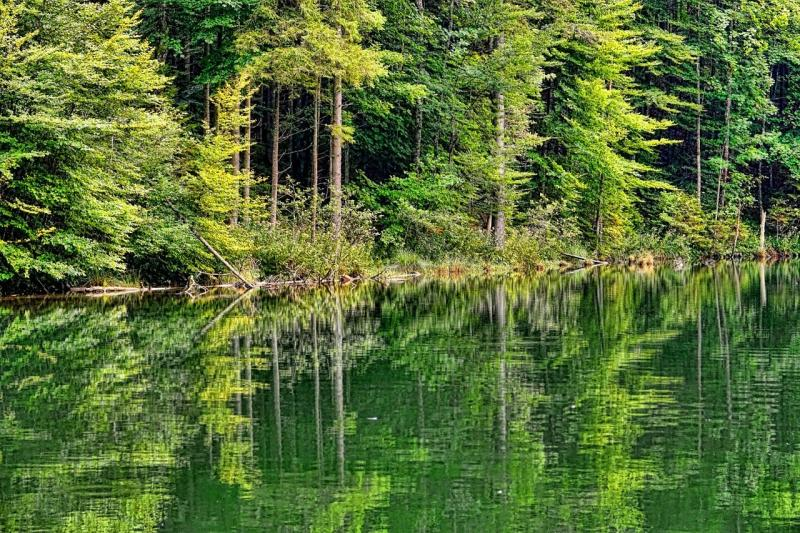 صور تحتوي #مياه #غابة #المناظر_الطبيعيه #طبيعة #خشب #الصيف #بركة_ماء