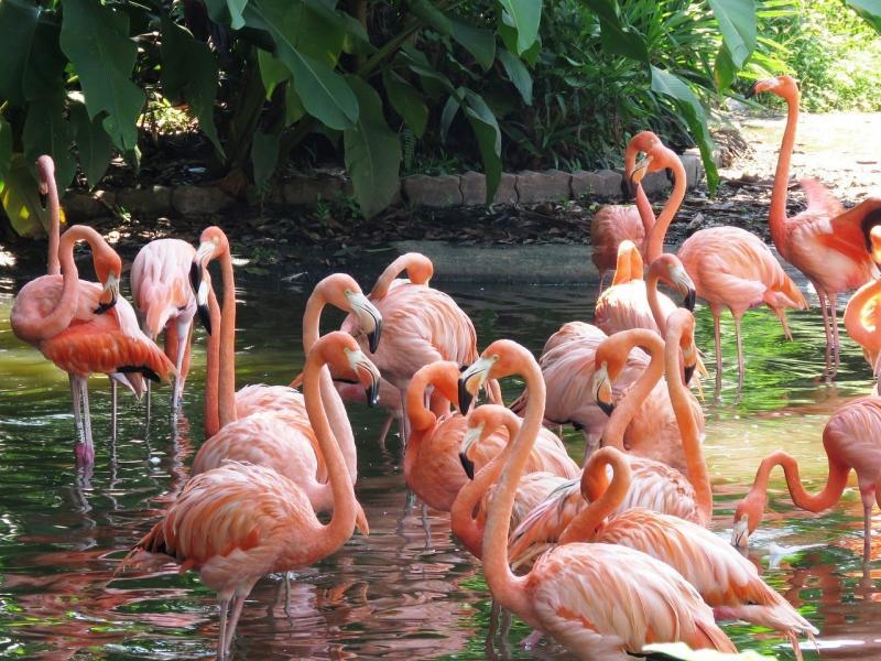 صور تحتوي #البشروس_طائر_مائي #طيور_النحام #الطيور_المائية