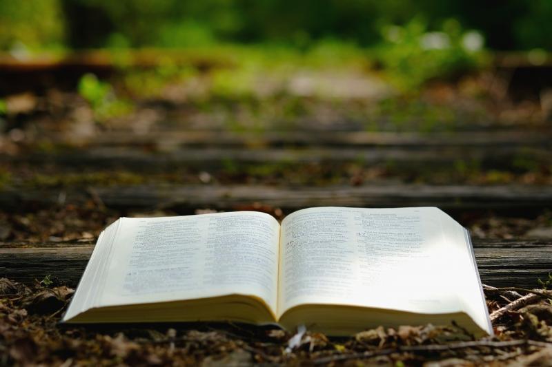 صور تحتوي #الكتاب_المقدس #طبيعة #خشب #السفر #قديم #القضبان