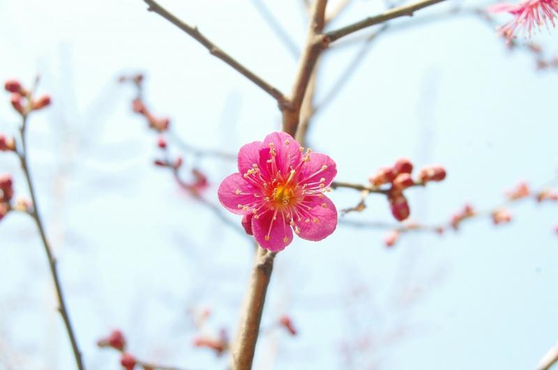 صور تحتوي #زهرة_وردية #ربيع #ازهار_الربيع #وظيفة_محترمة