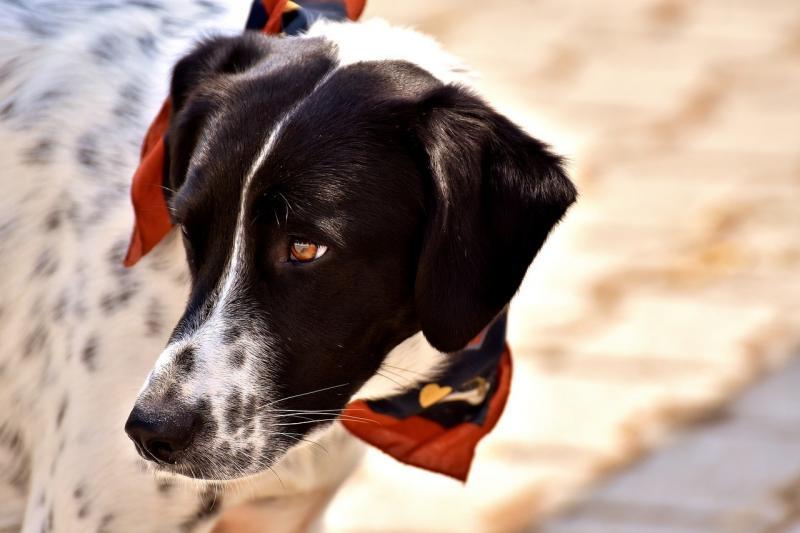 صور لـ #حيوان #جذاب #رأي #وجه #حسن #حيوان_اليف #الكلب