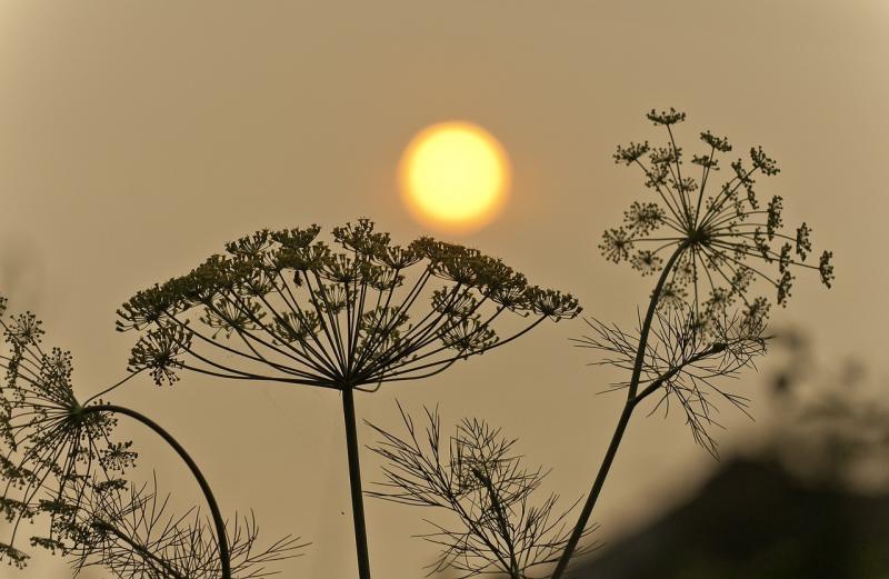 صور تحتوي #حريق_هائل #المناظر_الطبيعيه #دخان #شمس #التلوث #سيبيريا