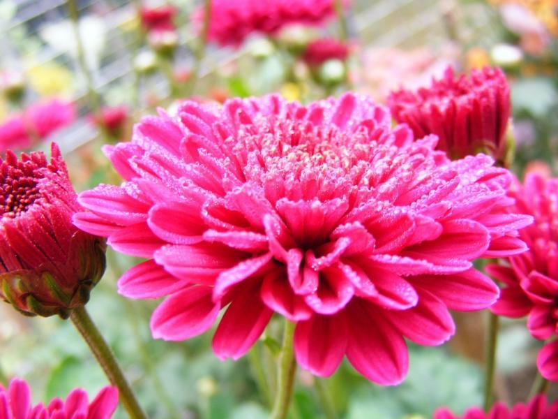 صور لـ #زهرة #حديقة #زهري #الصيف #ربيع #طبيعة #صور_طبيعة