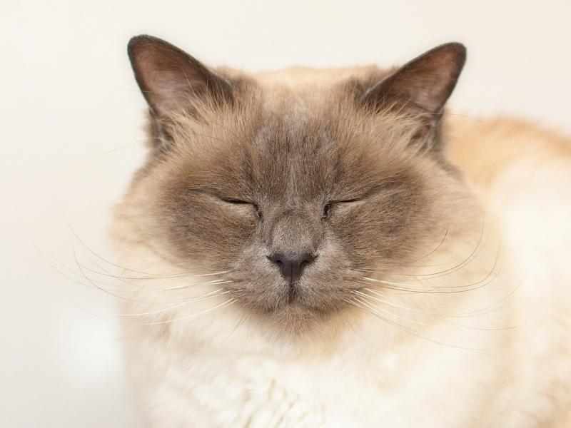 صور تحتوي #رئيس #وجه #شارب #تولد_القط #قط