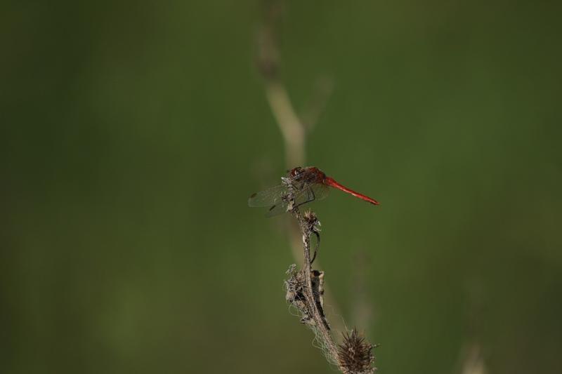 صور لـ #اليعسوب #طبيعة #فرع_شجرة #أجنحة #زاهى_الألوان #حشرة