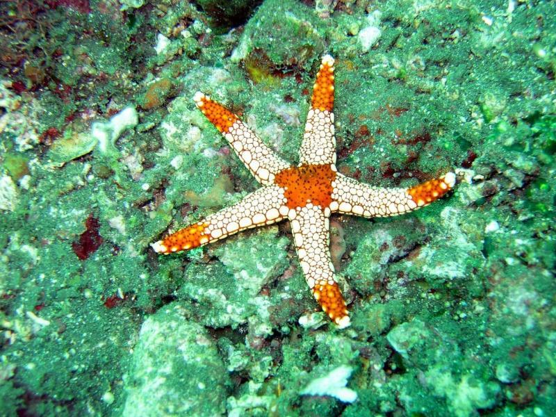 صور تحتوي #نجمة #محيط #بحر #جزر_المالديف #تحت_الماء #نجم_البحر #ماء