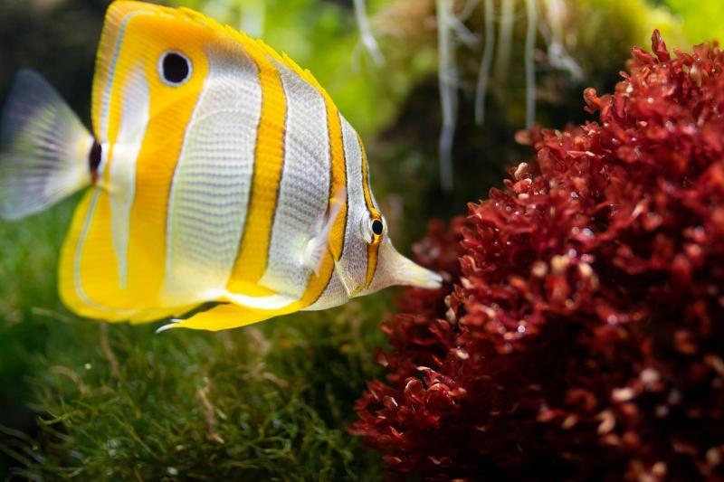 صور تحتوي #محيط #سمك #مخلوقات_البحر #حوض_سمك #تحت_الماء