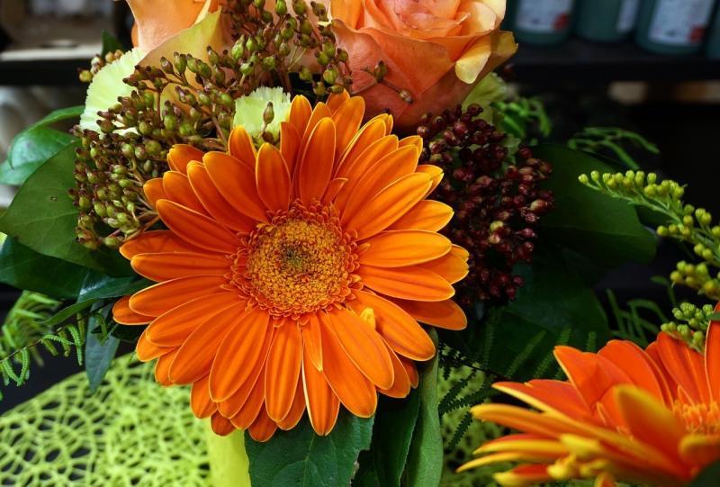 صور تحتوي #إزهار #البرتقالي #البابونج #زهرة #النباتية #زهر #طبيعة