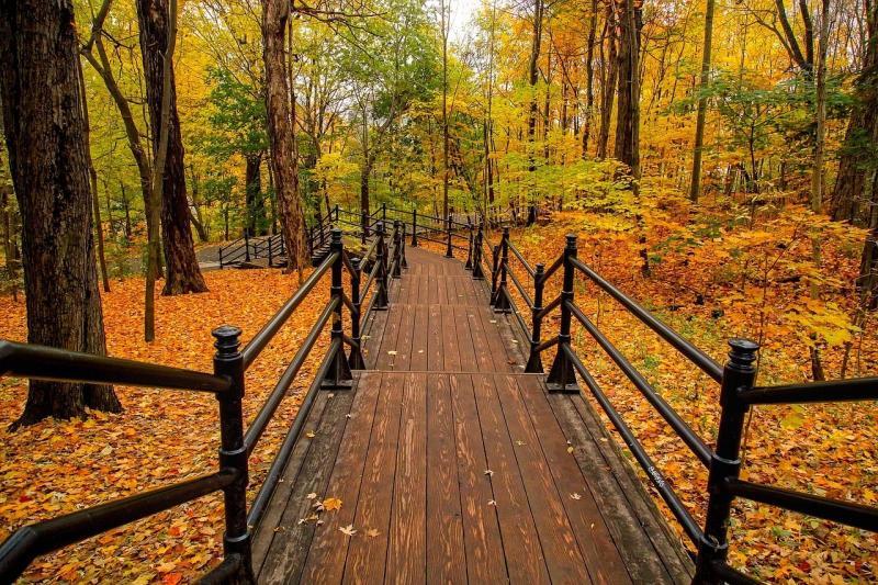 صور تحتوي #الخريف #الألوان #زاهى_الألوان #خريف #غابة #الأشجار #كندا