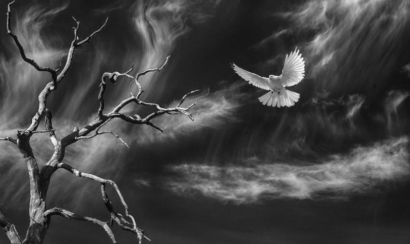 صور تحتوي #الفراغ #سماء #شجرة #طائر #حيث #طبيعة #شجرة_ميتة #سحاب
