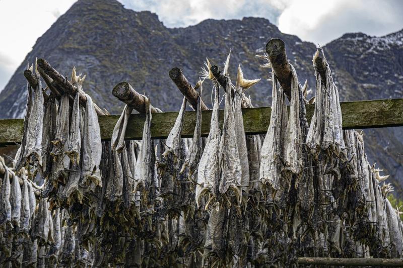 صور تحتوي #شنقا #سمك #النرويجية #قانون #النرويج #تجفيف #افوتين