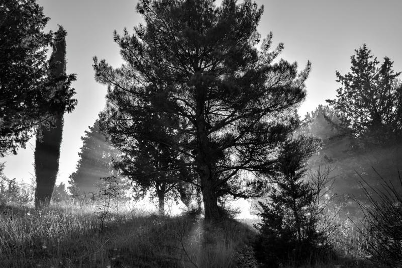 صور تحتوي #ضباب #المناظر_الطبيعيه #أسود_أبيض #طبيعة #مزاج #ضباب #الأشجار