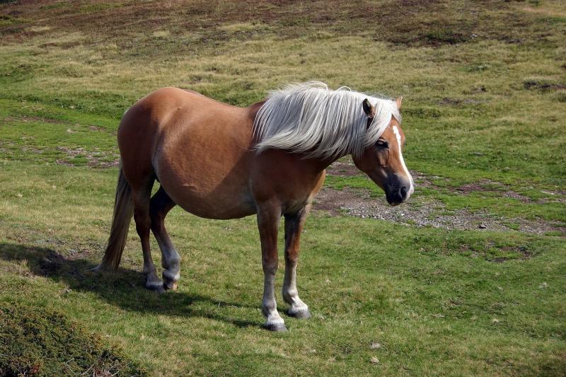 صور تحتوي #مرعى #بنى #حيوان #رماحة #حصان #طبيعة #Mane