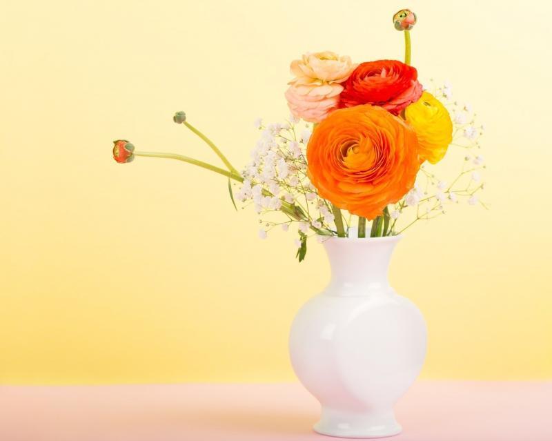 صور تحتوي #البرتقالي #زهور #حوذان #مزهرية #باق_على_قيد_الحياة