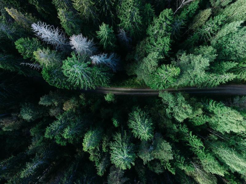 صور تحتوي #في_الهواء_الطلق #الغابة #غابة #الأشجار #المناظر_الطبيعيه #الطريق #أخضر