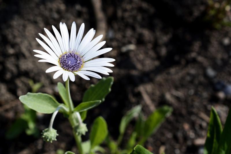 صور تحتوي #إزهار #زهرة #زهر #نبات