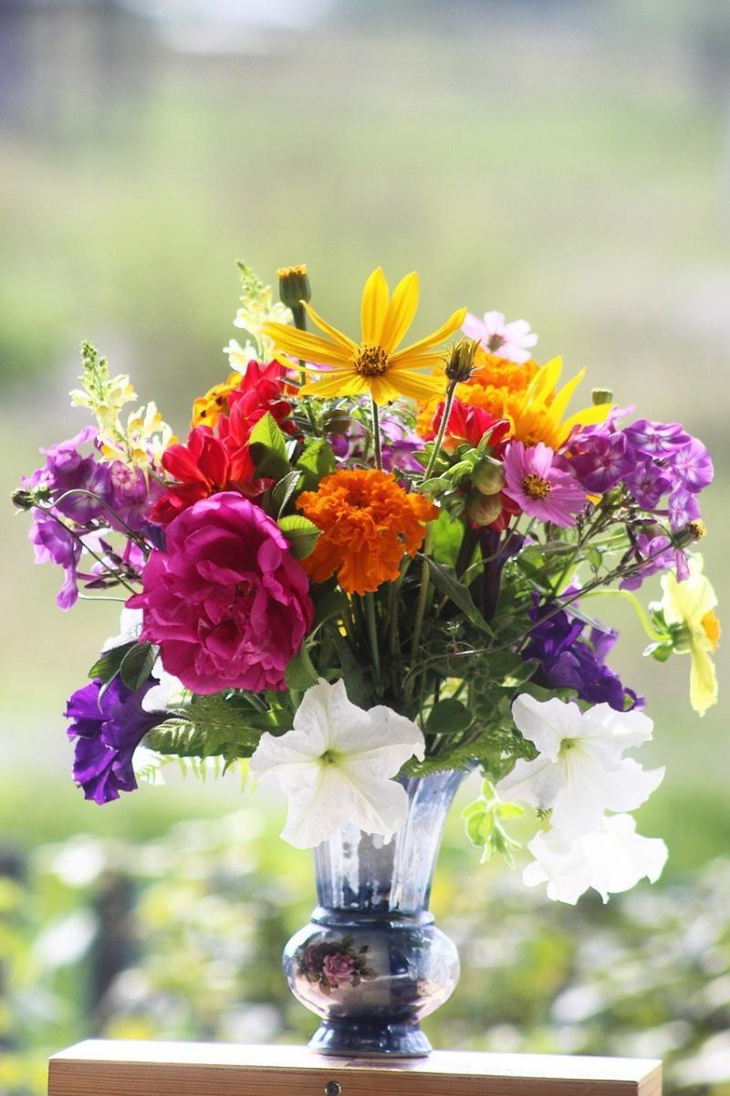 صور تحتوي #زهور #الخريف #جمال #ضوء #النباتات #طبيعة #هواية