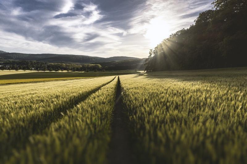 صور تحتوي #ا___قتصاص #سماء #نجيل #الزراعة #ريفي #طبيعة #حقل