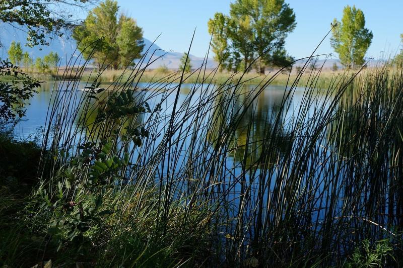 صور لـ #نجيل #صور_طبيعة #بركة_ماء #طبيعة #سابقا #النباتات #ماء