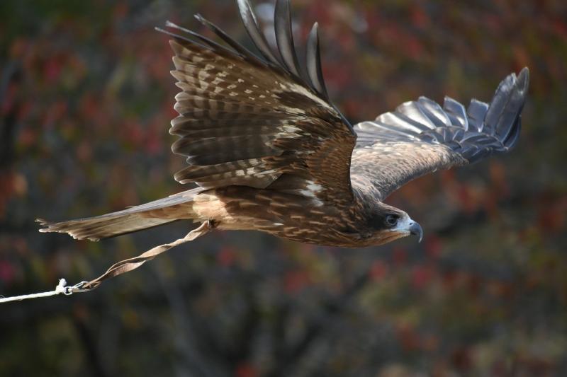 صور تحتوي #حيوان #رابتور #الريش #فيديو #طائر #منتزه_طبيعي