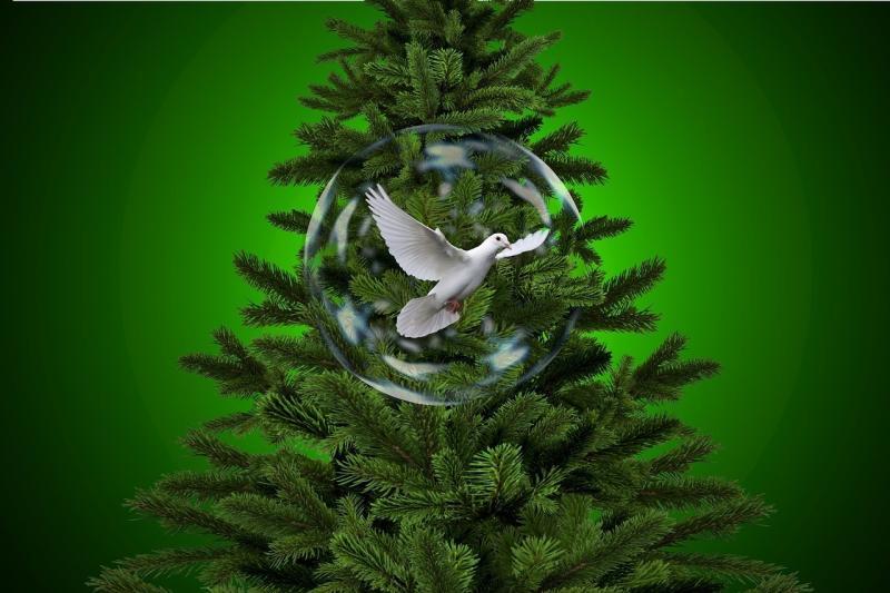 صور تحتوي #فقاعة_صابون #عيد_الميلاد #شجرة_التنوب #حيث #الذهب #طائر
