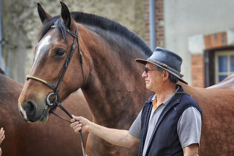 صور تحتوي #معرض #حصان #آردن