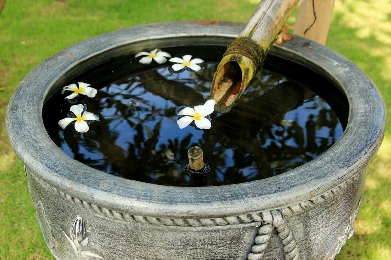 صور لـ #بالي #زهور #غريب #أندونيسيا