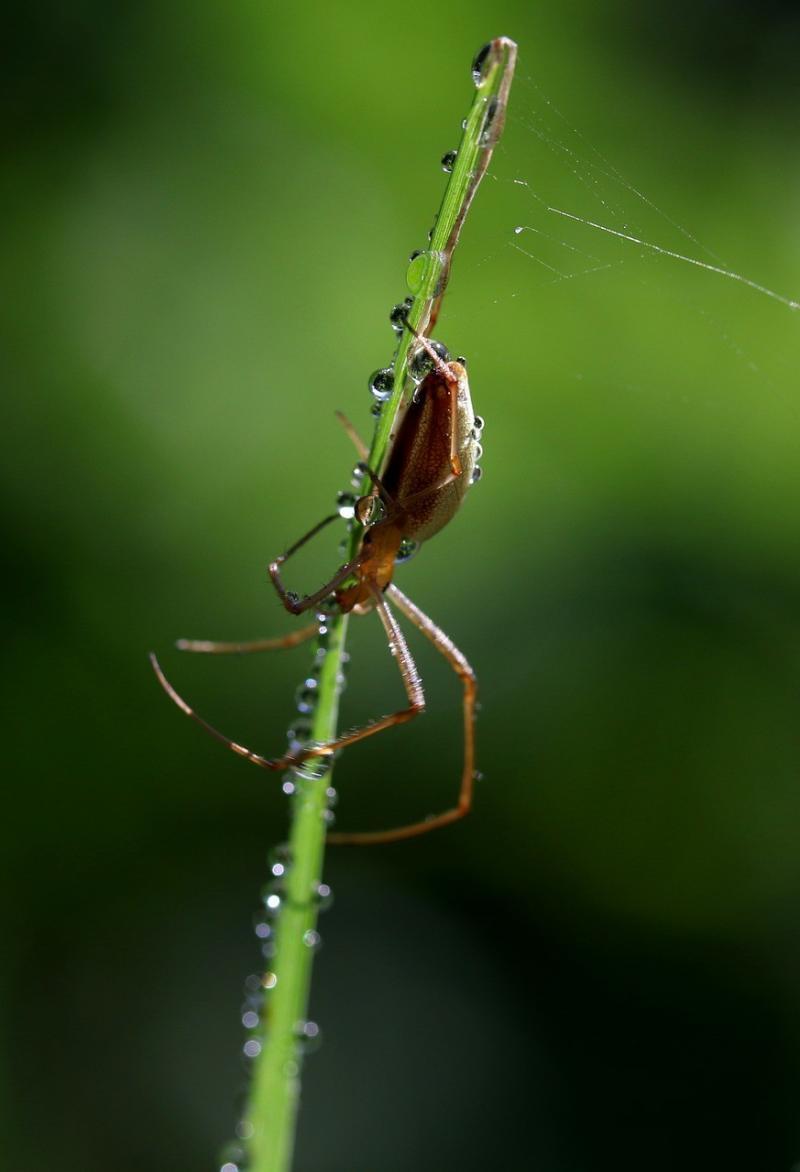 صور تحتوي #عنكبوت #دقيق #قطرات #ماء #مبلل #الشبكه_العنكبوتيه #نجيل