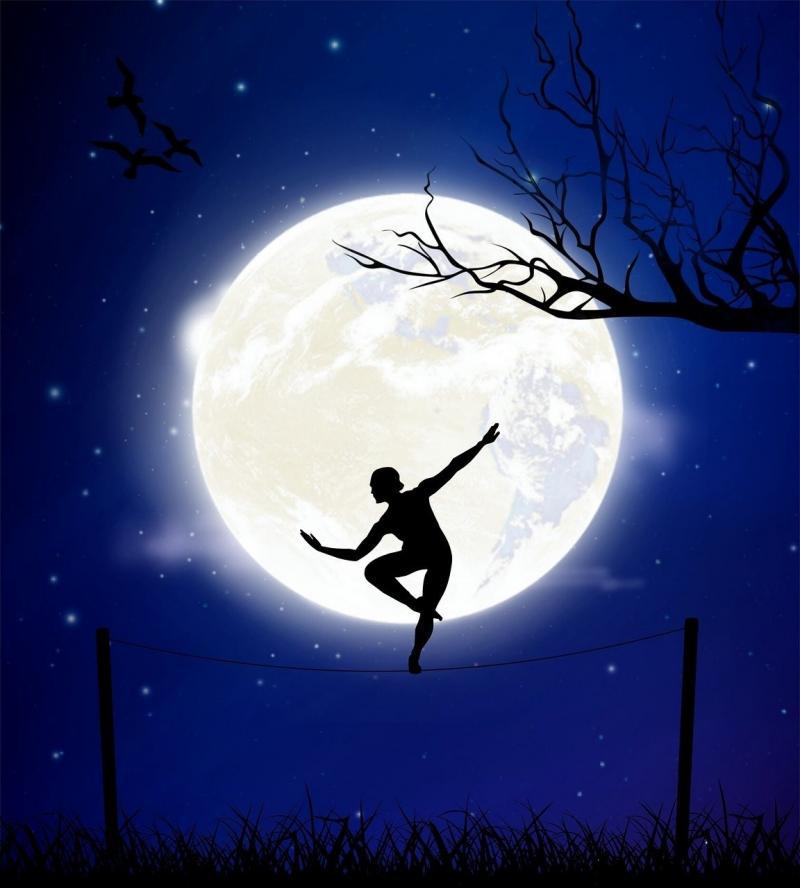 صور تحتوي #توازن #الفروع #القمر #الطيور #ليل