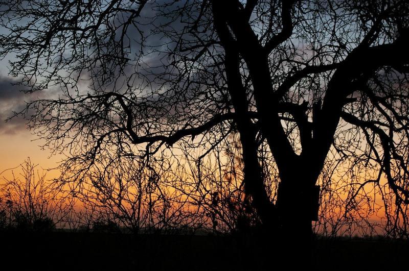صور لـ #كمثرى #صباح_الخير #شروق_الشمس #شتاء #أسود #التباين