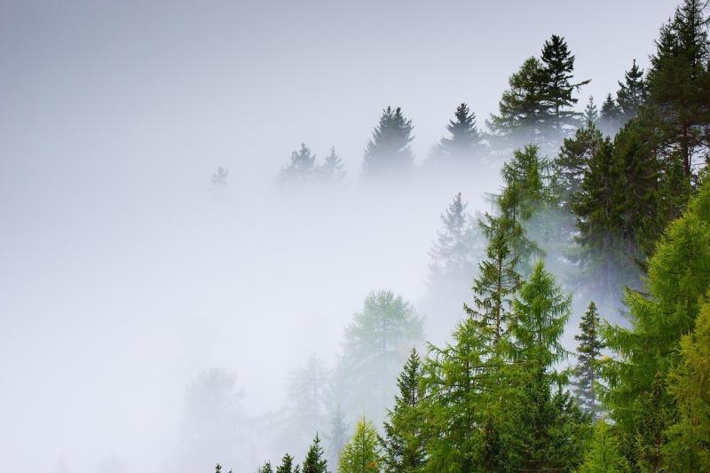 صور تحتوي #ضباب #الخريف #الأشجار #جذع #غابة #شجرة #طبيعة