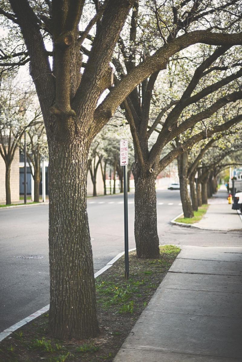 صور لـ #الطريق #الأشجار #رصيف_الشارع #شارع #رصيف