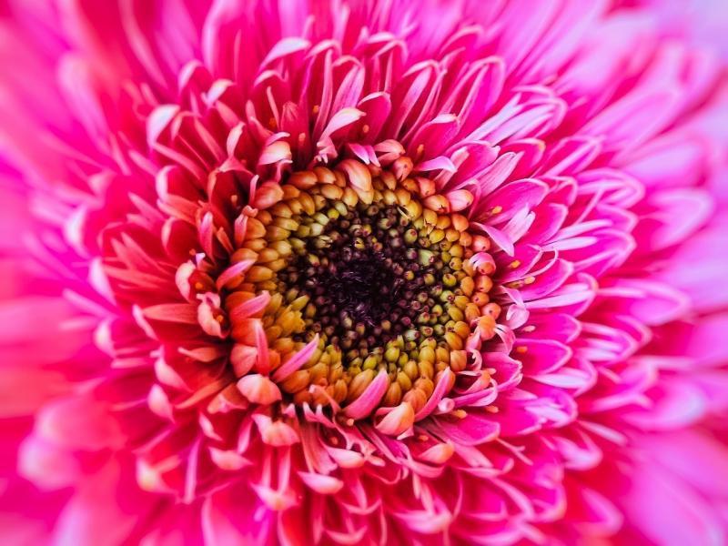 صور تحتوي #زهرة #الصيف #زهر #إزهار #زهري #طبيعة #ربيع