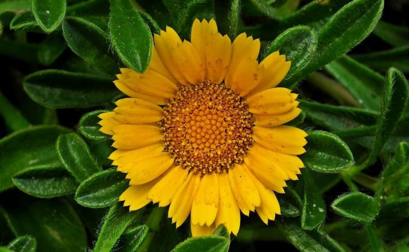 صور تحتوي #الأصفر #طبيعة #بتلات #حديقة #الصيف #زهرة