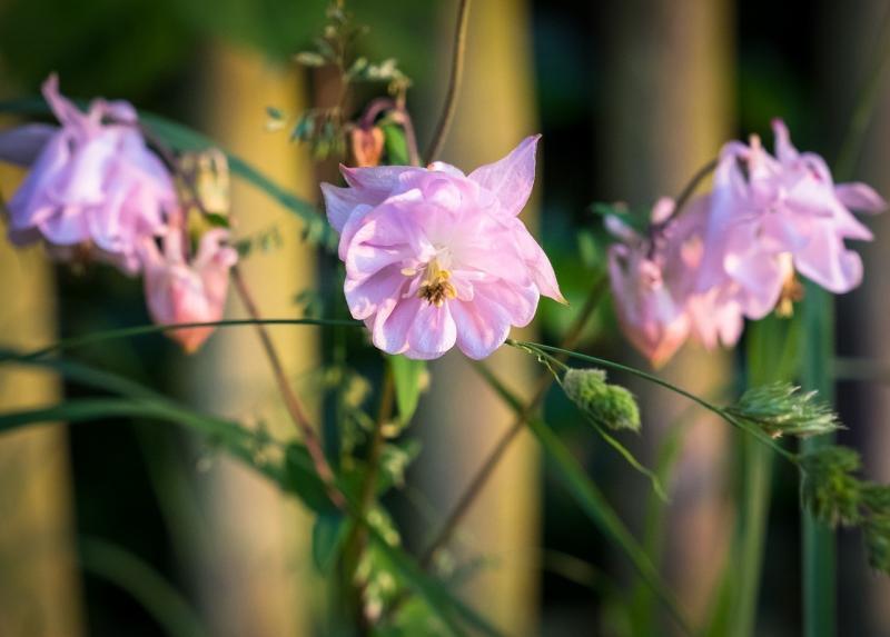 صور لـ #زهري #ربيع #زهرة #أخضر #الصيف #إزهار #أبيض