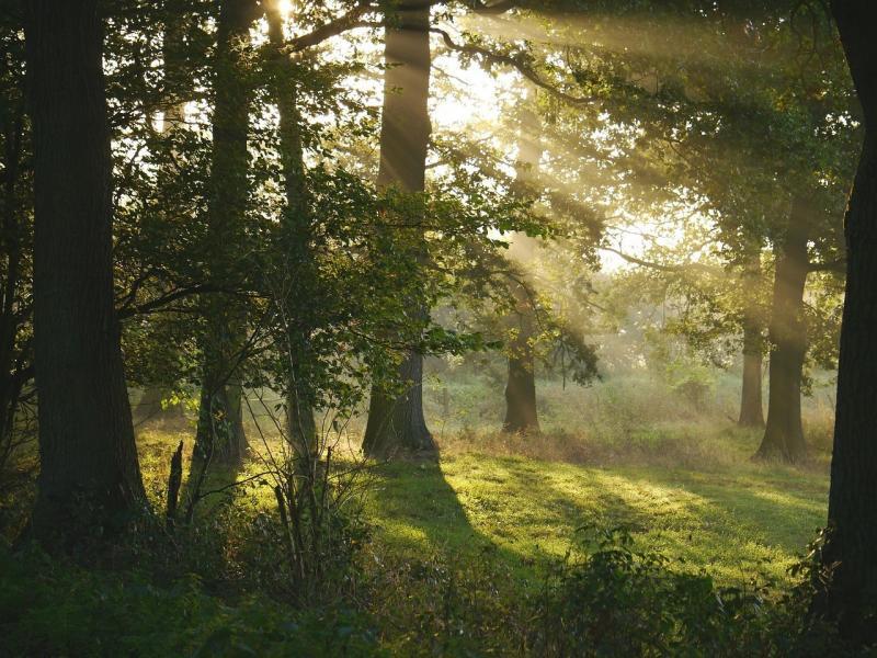 صور تحتوي #رطوبة #شعاع_الشمس #ندى #شمس_الصباح #فرجة_في_الغابة #غابة