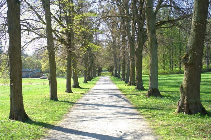 صور تحتوي #كالدن #شجرة #غابة #بعيدا #حديقة #Wilhelmsthal #منتزه