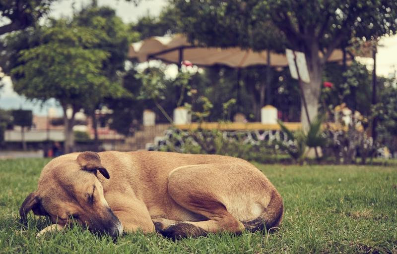 صور لـ #ينام #بديع #الحيوانات #راحة #الكلب #حيوان_اليف