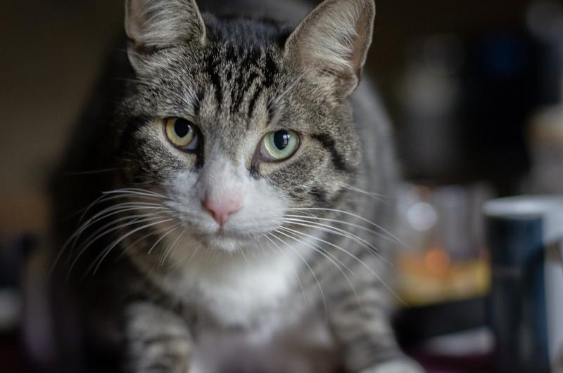 صور تحتوي #قط #عالم_الحيوان #سمك_الأسقمري_البحري #عيون #القط_المنزلي