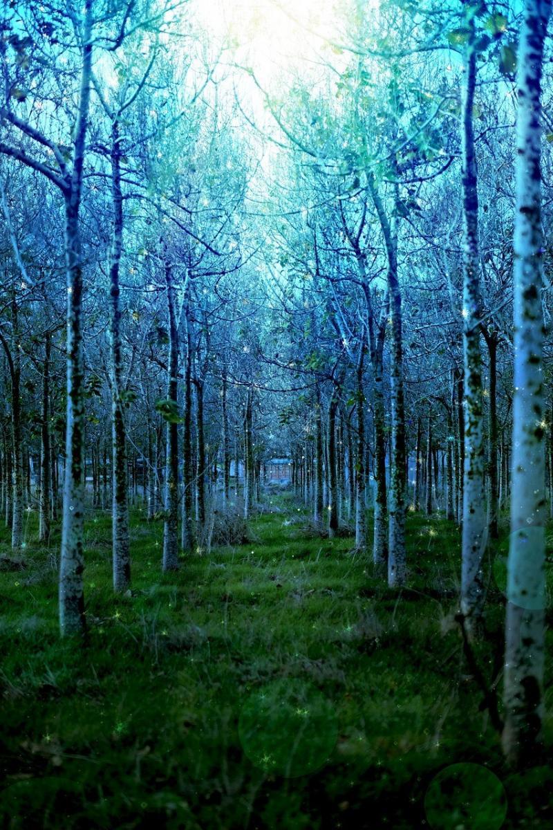صور تحتوي #الأشجار #طبيعة #شجرة #أخضر #الغابة #غابة #الروحاني