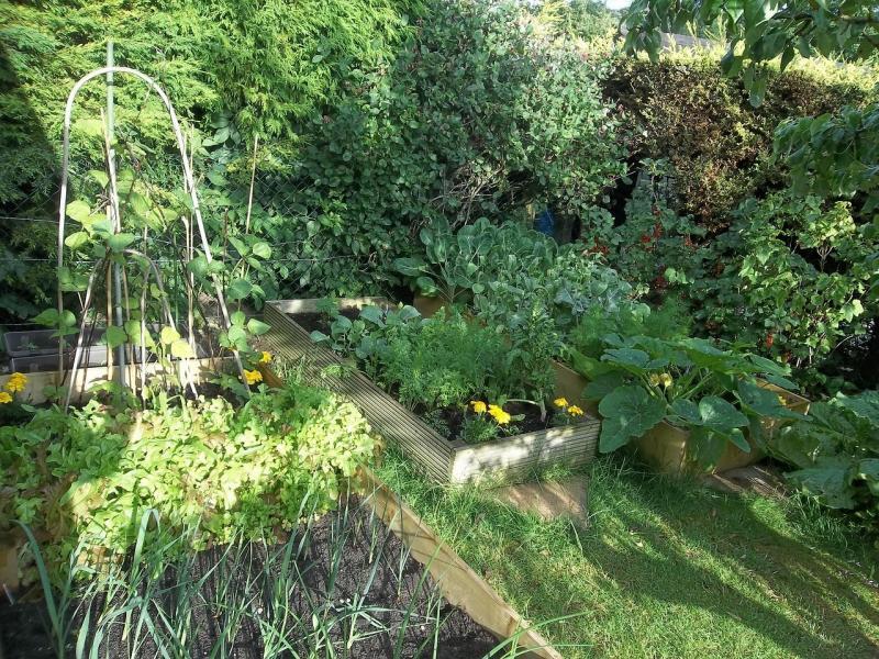 صور لـ #حديقة #إنتاج #خضروات