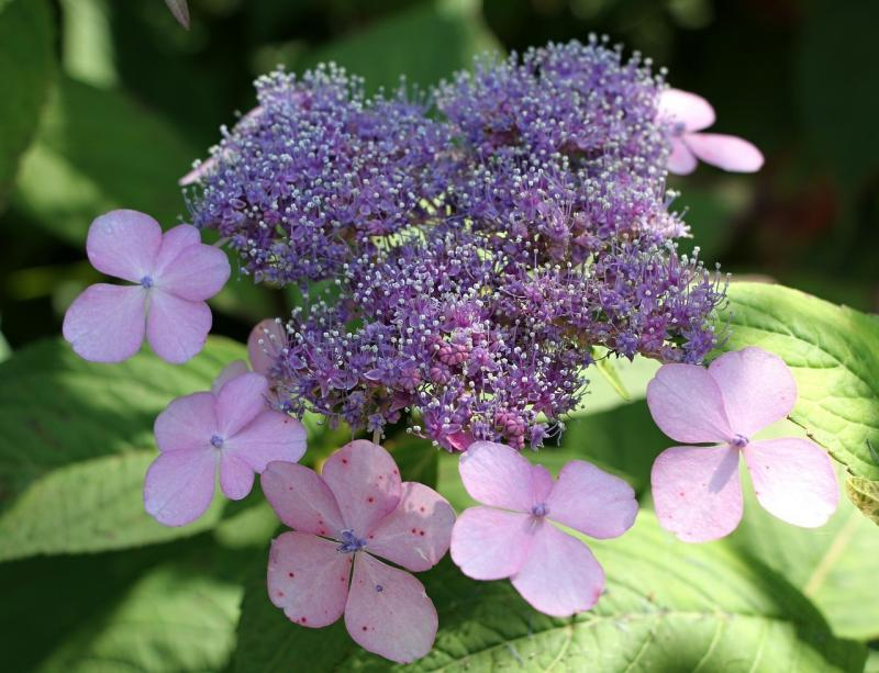 صور تحتوي #دقيق #زهور #زهري #طبيعة #صورة قريبة #زهرة #نبات