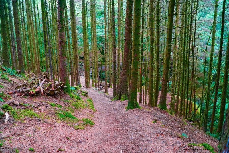 صور تحتوي #غابة #مسار #المناظر_الطبيعيه #الغابة #الأشجار #طبيعة #الغابات