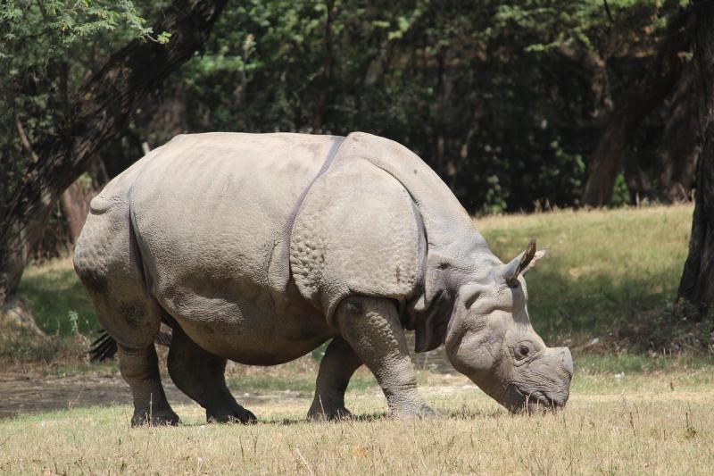 صور لـ #حديقة_حيوان #طبيعة #الحيوانات_البرية #وحيد_القرن #حيوان #بري #الحيوان_الثديي