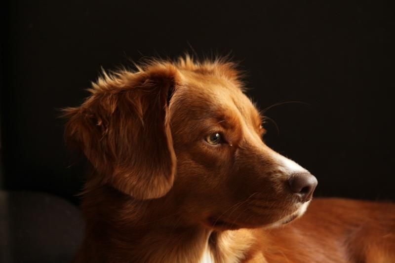صور تحتوي #عظيم #حيوان_اليف #الكلب #رئيس #صورة